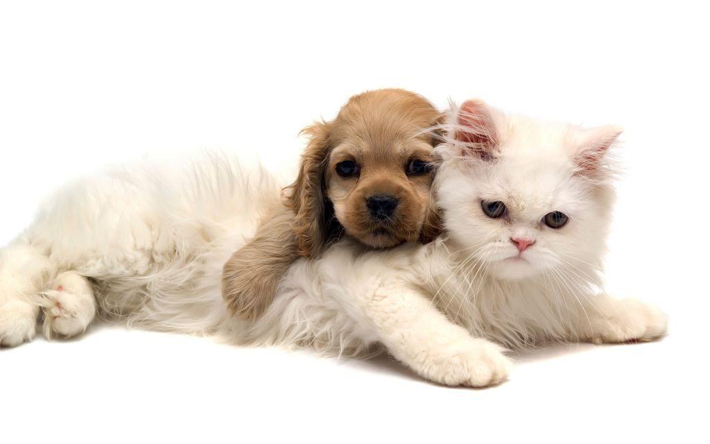 Oración Para Las Mascotas